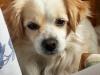 gimmen_hunden